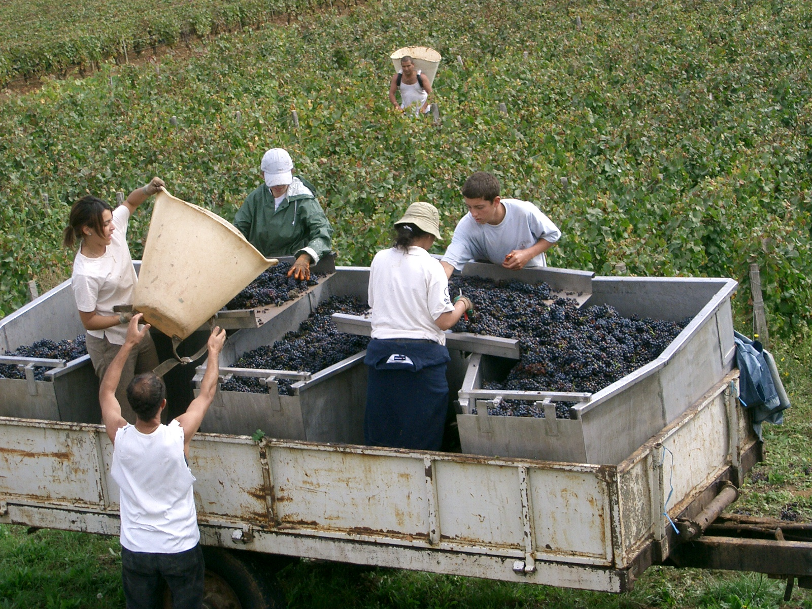 Grape harvest festivals - study Spanish at Academia CILE in Malaga