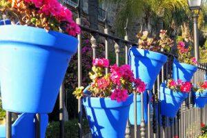 Die blauen Blumentöpfe