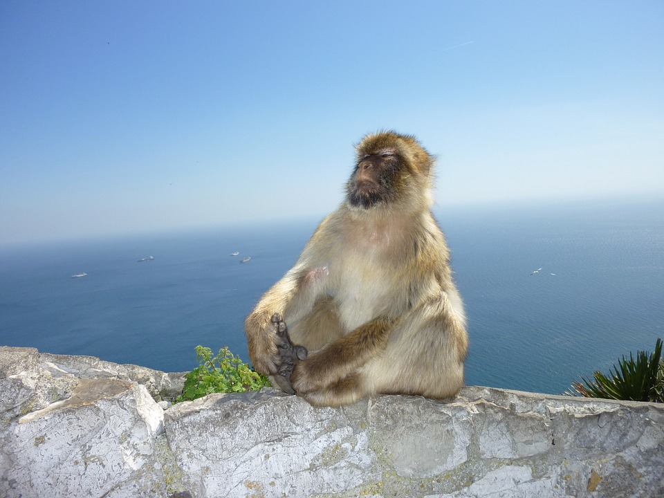Gibraltar monkeys - study Spanish in Malaga at Academia CILE