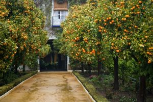A Spanish street – part I